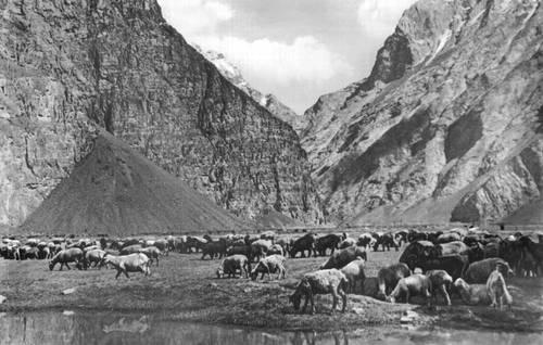 На горном пастбище. Горно-Бадахшанская автономная область.