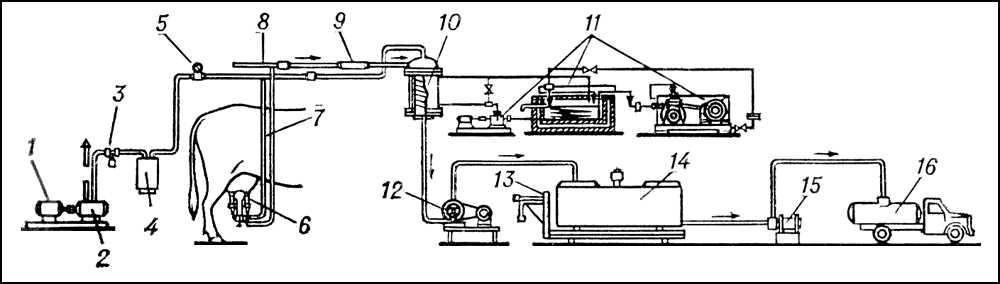 Схема доильной установки с молокопроводом: 1 — электродвигатель; 2 — вакуум-насос; 3 — вакуум-регулятор; 4 — вакуум-баллон; 5 — вакуумметр; 6 — доильный аппарат; 7 — вакуум-трубопровод; 8 — молокопровод; 9 — фильтр; 10 — охладитель; 11 — холодильная установка с насосом; 12 и 13 — молочные насосы; 14 — ёмкость для временного хранения молока; 15 — весы: 16 — молоковоз. Стрелками показано движение молока. Доильная установка.