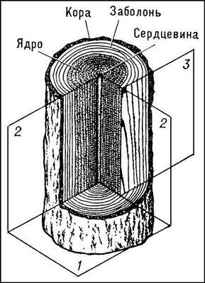 Рис. 1. Основные части ствола и его главные разрезы: 1 — поперечный; 2 — радиальный; 3 — тангенциальный. Древесина.