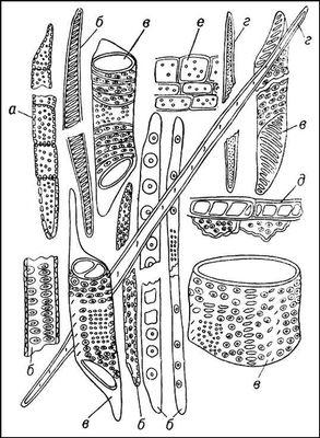 Рис. 2. Типы клеток, слагающих древесину: а — древесинная паренхима; б — трахеиды; в — членики сосудов (трахей); г — волокна либриформа; д — клетки гетерогенного сердцевинного луча хвойного дерева; е — клетки гетерогенного сердцевидного луча лиственного дерева. Древесина.