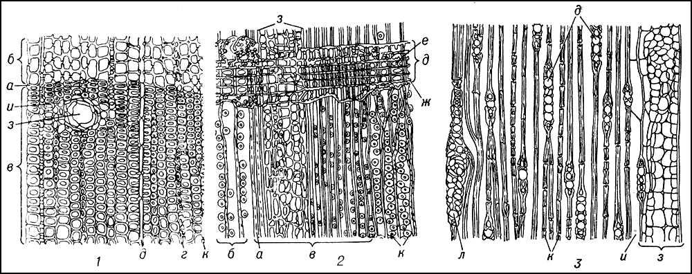 Рис. 4. Участки срезов древесины сосны: 1 — поперечного; 2 — радиального; 3 — тангенциального; а — граница годичного кольца; б — поздняя древесина; в — ранняя древесина: г — новый ряд вклинивающихся трахеид; д — гетерогенный сердцевинный луч, состоящий из лучевых трахеид (е) с мелкими окаймленными порами и паренхимных клеток с большими окновидными порами (ж); з — смоляной ход (хорошо видны выстилающие его эпителиальные клетки); и — клетки паренхимы, окружающие смоляной ход; к — окаймленные поры; л — сердцевинный луч с горизонтальным смоляным ходом. Древесина.