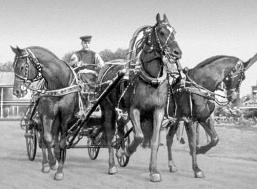 Тройка лошадей. Животноводство.