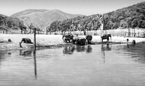 Озеро Перияр в Южной Индии. Индия.