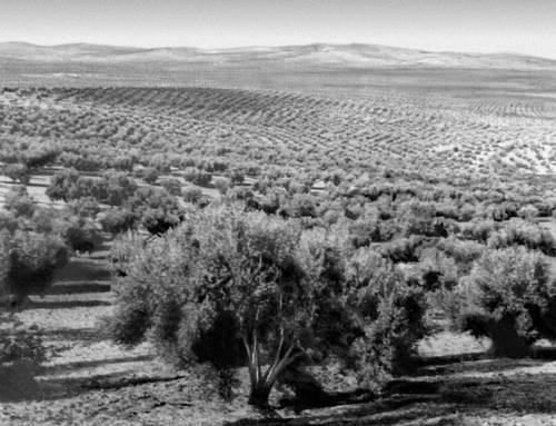 Вид на Андалусскую низменность (провинция Хаэн). Испания.