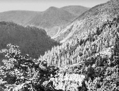 Лесистые горы Малого Кавказа. Триалетский хребет к востоку от Баржоми. Кавказ.