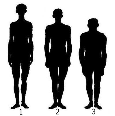 Конституционные типы: 1 — астеник; 2 — нормостеник; 3 — гиперстеник. Конституция человека.