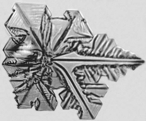 Рис. 10. Начальная стадия дендритного роста кристалла иодоформа. Кристаллизация.