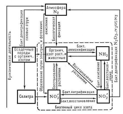 Схема круговорот веществ на лугу