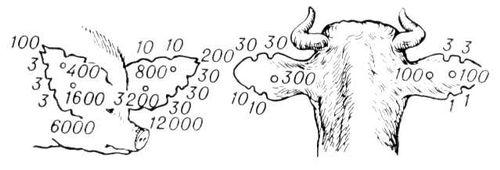 Мечение выщипами на ушах. Мечение сельскохозяйственных животных.