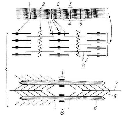 Ультраструктура миофибриллы поперечнополосатого мышечного волокна (схема). А — в оптическом микроскопе; Б — в электронном микроскопе; 1 — полоска М; 2 — полоска Z; 3 — диск Н; 4 — диск А; 5 — диск I; 6 — толстая протофибрилла; 7 — тонкая протофибрилла; 8 — субдиск Н; 9 — мостики. Миофибриллы.
