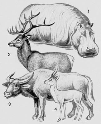 Млекопитающие. Парнокопытные: 1 — бегемот; 2 — олень; 3 — буйвол; 4 — джейран. Млекопитающие.