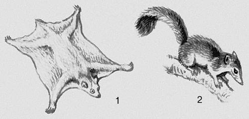 Млекопитающие. Шерстокрылы: 1 — Шерстокрыл. Приматы: 2 — тупайя. Млекопитающие.