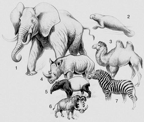 Млекопитающие. Хоботные: 1 — африканский слон. Сирены: 2 — ламантин. Мозоленогие: 3 — верблюд. Непарнокопытные: 4 — носорог; 5 — тапир; 6 — бородавочник. Парнокопытные: 7 — зебра. Млекопитающие.