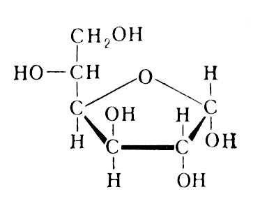Циклическая форма. D-глюкофураноза. Моносахариды.