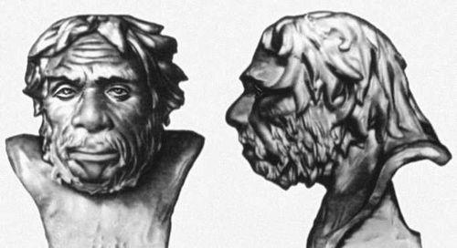 Неандерталец (фас и профиль). Реконструкция М. М. Герасимова, 1948. Неандертальцы.