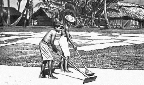 Сушка риса. Никарагуа (государство в Центр. Америке).