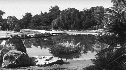 Никитский ботанический сад. Новый парк на мысе Монтодор. Никитский ботанический сад.