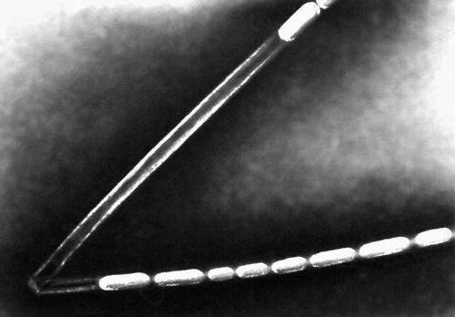 Клетки Sphaerotilus natans во влагалище (часть влагалища пустая). Нитчатые бактерии.