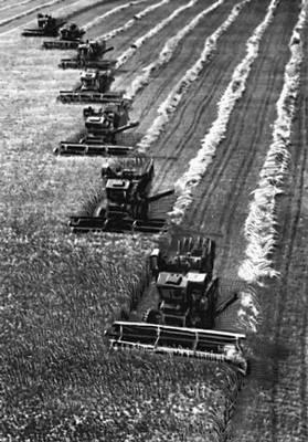 Семипалатинская область. Уборка зерновых. Семипалатинская область.