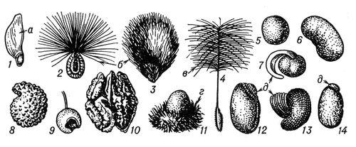 Рис. 3. Форма семян: 1 — сосны; 2 — ваточника; 3 — хлопчатника; 4 — строфанта; 5 — гороха; 6 — фасоли; 7 — хохлатки; 8 — ясколки; 9 — бересклета; 10 — грецкого ореха; 11 — равеналы; 12 — фиалки; 13 — чистотела; 14 — клещевины; а — крылышко; б — волоски; в — летучка; г — ариллус; д — карункула. Семя (ботан.).