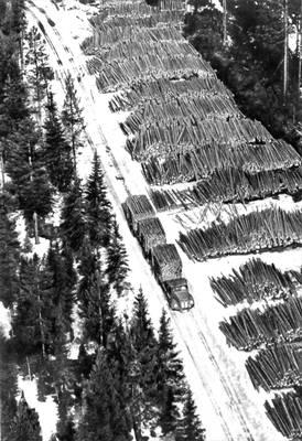 Лесозаготовки в северной части страны. Швеция.